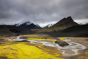 "Bright yellow lichen grows along a stretch of the river Jökulgulskvísl, which means ""glacial yellow fork,"" in the southern highlands of Iceland."
