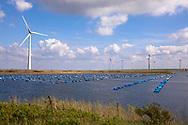 shell breeding and windmills at Lake Grevelingen near Bruinisse, Schouwen-Duiveland, Zeeland, Netherlands.<br /> <br /> Muschelzucht und Windraeder am Grevelingen Meer bei Bruinisse, Schouwen-Duiveland, Zeeland, Niderlande.