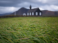 Green field at Búðir. The black church in background. Snæfellsnes Peninsula, West Iceland.
