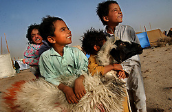 ZHARE DASHT,AFGHANISTAN - SEPT. 3: Afghan children  play with their family's one sheep that will be slaughtered  to earn  money (about $3) as they struggle to survive in the Zhare Dasht camp, 30 kilometers from Kandahar after they were relocated September 3, 2002.  As an estimated 1.6 million Afghan refugees return to Afghanistan,  ethnic Pashtuns from northern Afghanistan are seeking safety in refugee camps in the south. Numbering up to 120,000,  Pashtuns are fleeing the Tajik- and Uzbek-dominated cities of the north out of fear and prefer to live in the dismal camps like Zhare Dasht which is set in the middle of a desert about 30 kilometers west of Kandahar. (Photo by Ami Vitale/Getty Images)