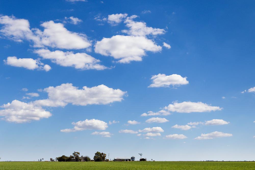 Green early crop  field under blue sky with cumulus clouds near Jimbour Queensland, Australia