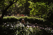 A summer scene in Shakespeare Garden, Central Park.
