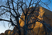 Joshua Tree, California, 2009-The sun sets on a rock formation behind a tree.