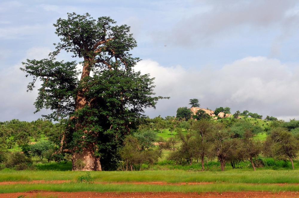 La région du Sahel souffre de la sécheresse, mais pendant l'hivernage le paysage est vert..Ololdou, Sénégal. 04/09/2010..Photo © J.B. Russell