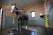 Wasplaats<br /> Veiling Dutch Sport Horse Sale 2013<br /> © DigiShots