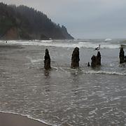Neskowin ghost forest, Oregon