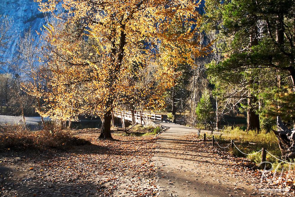 Yosemite Valley's Swinging Bridge and Fall Color, Yosemite National Park, California