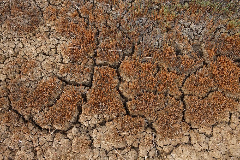 Soil of a dry stream, Bagerova Steppe, Kerch Peninsula, Crimea, Ukraine