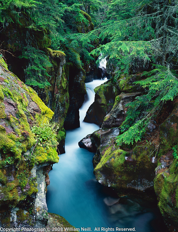 Gorge along Avalanche Creek, Glacier National Park, Montana