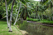 Palms along Lawai Stream at Allerton Garden, on the south shore of Kauai, Hawaii, USA. Address: 4425 Lawai Rd, Koloa, HI 96756. Nestled in a valley transected by the Lawai Stream ending in Lawai Bay, Allerton Garden is one of five gardens of the non-profit National Tropical Botanical Garden (ntbg.org).