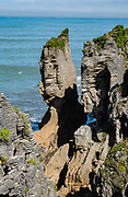 A sea stack erodes from a cliff at Punakaiki Pancake Rocks and Blowholes Walk, on Dolomite Point in Paparoa National Park, between Westport and Greymouth in the West Coast region of New Zealand's South Island.