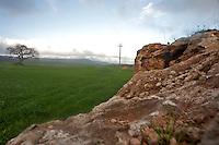Crispiano, marzo 2013.Campo di grano nel territorio di Crispiano, direzione Massafra