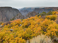 http://Duncan.co/fall-colour-at-black-canyon