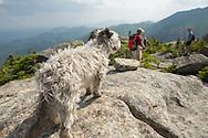 Small dog on the Summitof Grace peak