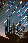 MEXICO, BAJA CALIFORNIA Star trails in sky above desert