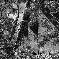 Large bridge and trees