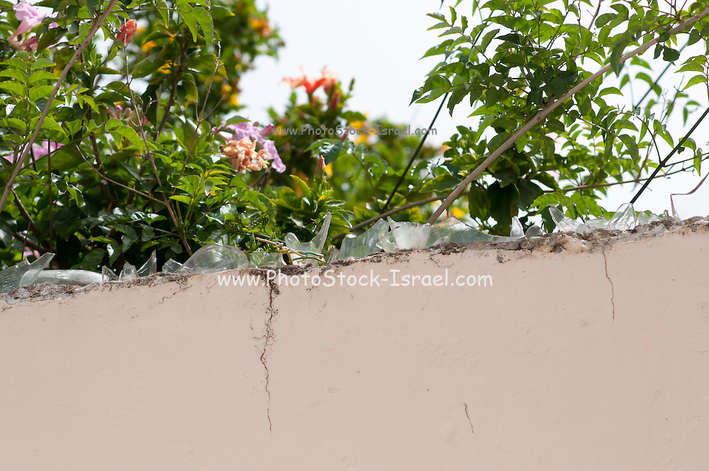 wall top covered with broken glass pieces