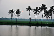 India, Kerala backwaters Landscape Pal trees at sunset
