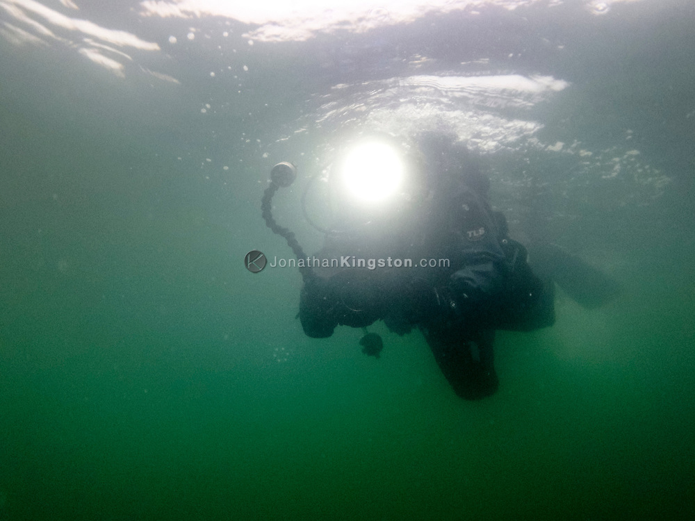 A diver in a drysuit films life in the frigid, green, plankton rich waters of Williams Cove, Tracy Arm, Alaska.