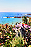 Wildflowers Off The Bluff Of Laguna Beach California