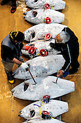 Buyers examine the tuna lined up for auction at Misaki Port fish market, west of Tokyo, Japan on Tuesday March 17 2009.