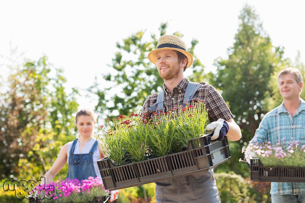 Gardeners carrying flower pots in crates at garden