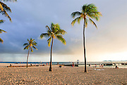 Three palm tree on Waikiki beach.