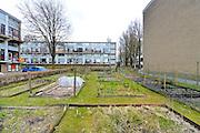 Nederland, Nijmegen, 16-3-2016Een vrouw in haar moestuintje tussen de flats in de Aldenhof in de wijk Dukenburg  een moestuin inn de stad is voor veel mensen een vorm van ontspanning en ook contact en voeling hebben met het buitenleven, de natuur . Er zijn verschillende percelen, perceeltjes waar verschillende mensen hun grond bewerken en groente telen  .FOTO: FLIP FRANSSEN
