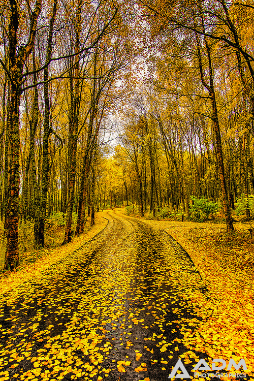 Autumn trees in Porcuipine Campground, Hope, Alaska