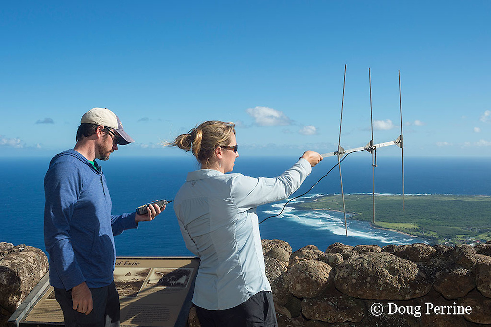 NOAA researcher Dr. Charles Littnan holds receiver while Duke University PhD candidate Kenady Wilson turns a VHF antenna to locate a Hawaiian monk seal, Monachus schauinslandi, carrying a Crittercam and tracking instrumentation package, Kalaupapa Lookout, Molokai, Hawaii, USA, Ho Ike a Maka Project