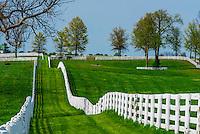 Thoroughbred horses in pasture, Calumet Farm, Lexington, Kentucky USA.