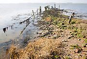 Shoreline of River Alde at Brick Dock near Aldeburgh, Suffolk, England