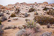 Jumbo Rocks camp ground in Joshua Tree National Park, California.