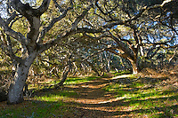 Hiking Trail, Los Osos Oaks State Reserve, California
