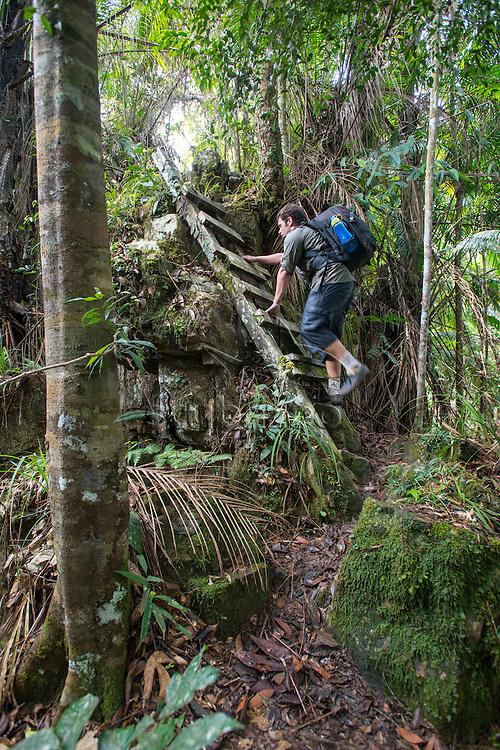 Man clibing a ladder in the jungle, Maliau Basin, Sabah, Malaysia, Borneo,