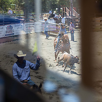 A reflection from the judges stand shows an arena official waving a flag, bottom left, as a contestant jets after a calf, top right, during a roping event at the 62nd Annual Woodside Junior Rodeo.