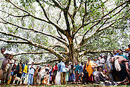 Tree of Life. Villagers gather in the shade of a huge fig tree to collect a supplementary ration of famix for their children. Famix is a concentrated powder that includes maize, peas and soya beans, providing crucial carbohydrates and energy. <br /> <br /> Wolaitta District, Southern Ethiopia