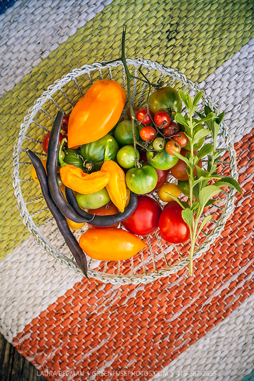 A variety of just harvested tomatoes, pepers, beans and herbs in a white wire basket on a striped woven cloth.
