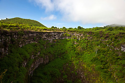 "View of Los Gemelos / ""The Twins"", one a pair of volcanic depressions, Galapagos Islands National Park, Santa Cruz Island, Galapagos, Ecuador"