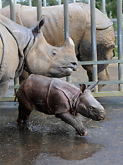 JAN 8 2013 Jamil : newest arrival at Whipsnade Zoo