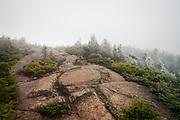 Trail near treeline in the White Mountains