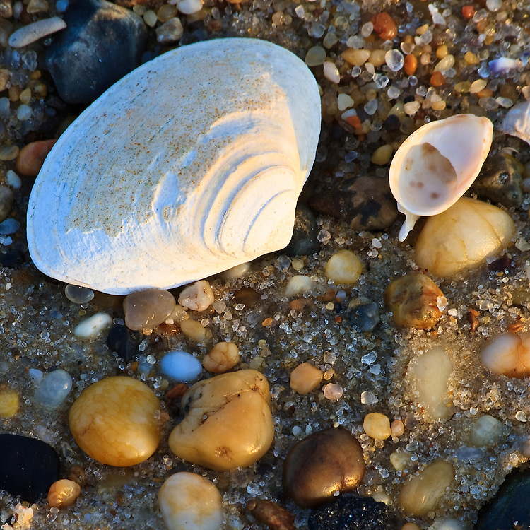 Close-up of shells and beach sand at sunset, Cape Henlopen State Park, Lewes, Delaware