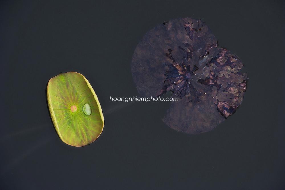 Vietnam Images-still life-nature-lotus-reflection -Hoàng thế Nhiệm