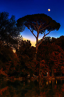 """Sunset moon shining over pine tree at Villa Borghese – Rome Autumn""… <br />