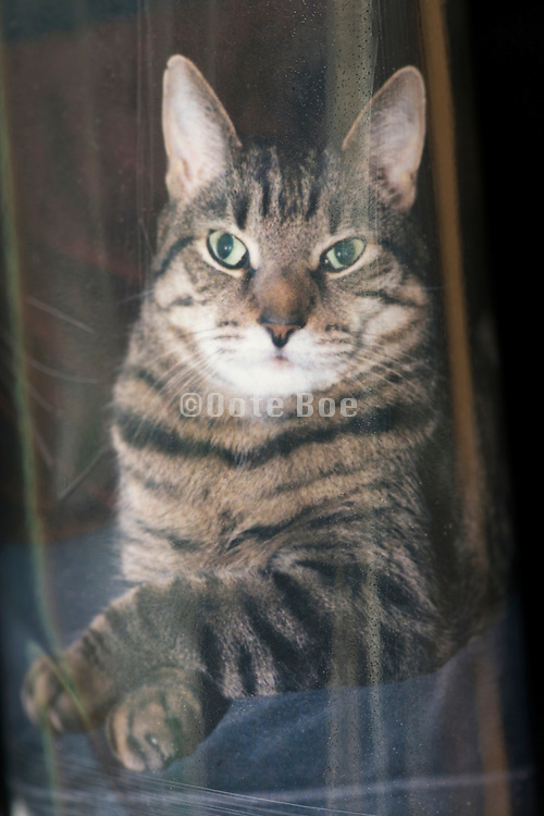 a photo of a photo of a tabby cat