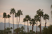 palm trees at sunset California USA