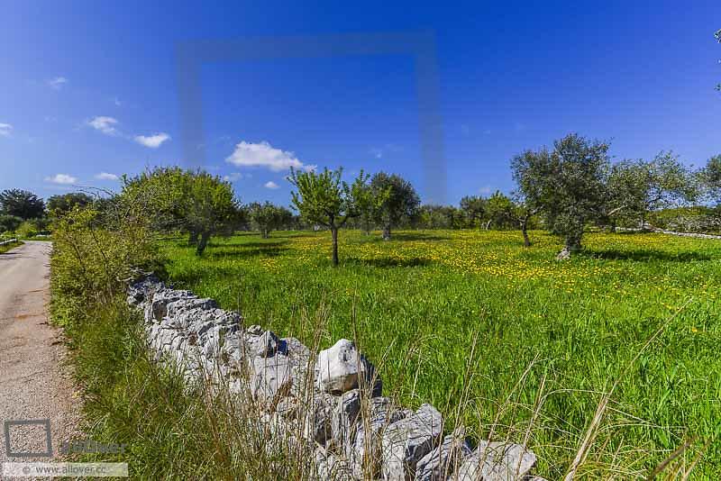 Trulli Region Alberobello, Apulia, Italy