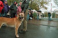 02.10.1998, Germany/Bonn:<br /> Polizeihund Lucky,  Koalitionsverhandlungen zwischen SPD und  Bündnis 90 / Die Grünen, Landesvertretung Nordrhein-Westfalen<br /> IMAGE: 19981002-01/01-27