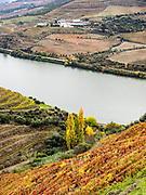 Uniform color on opposite bank is Touriga Nacional, foreground is multi-colored because it is a field blend