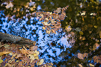 Fall leaves on a forest pond